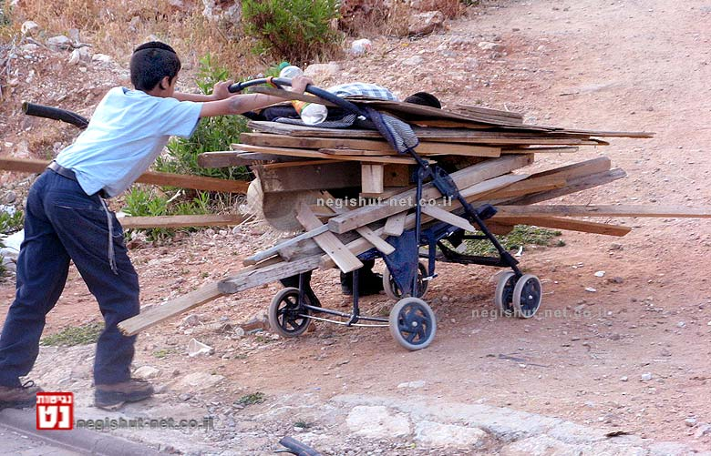 """איסוף עצים לל""""ג בעומר   צילום: ויקיפדיה"""